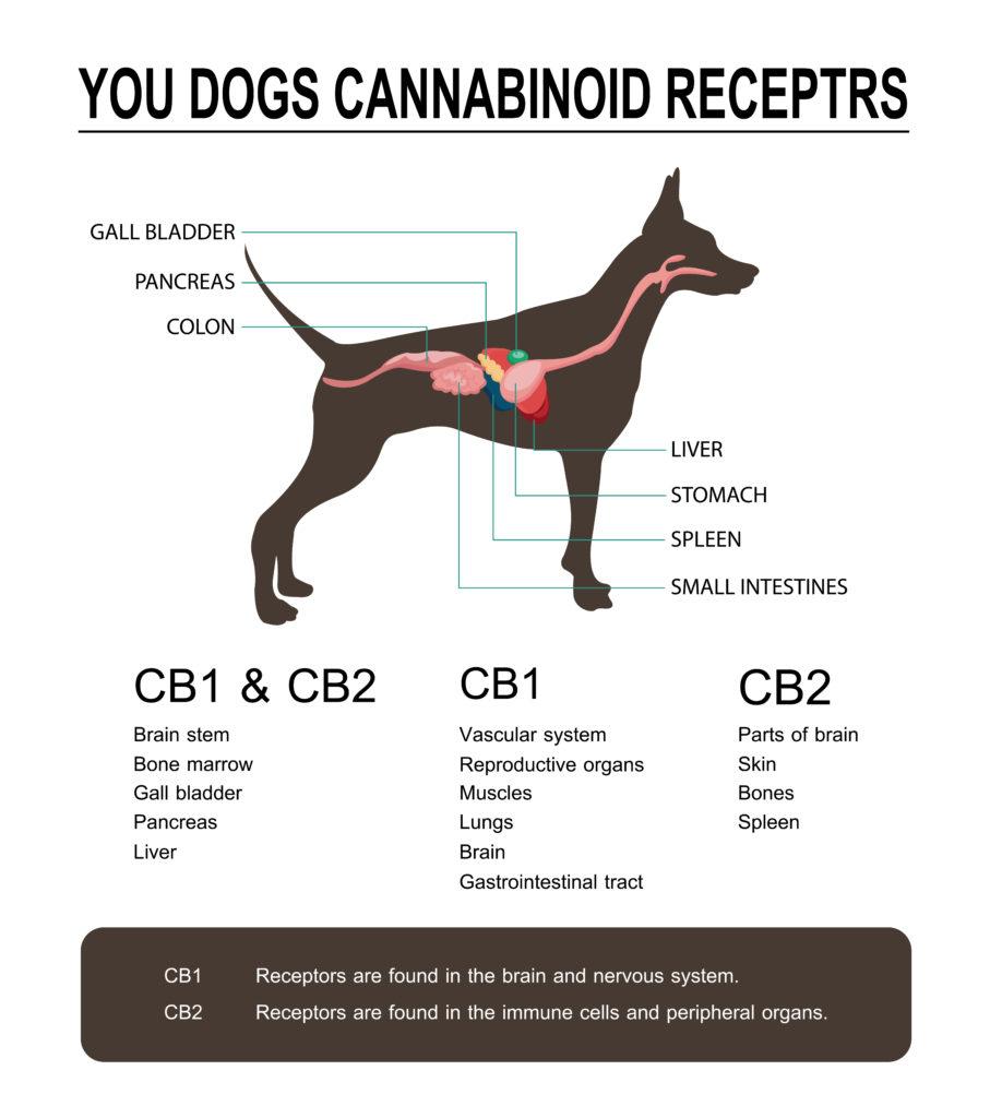 Dog Endocannib.